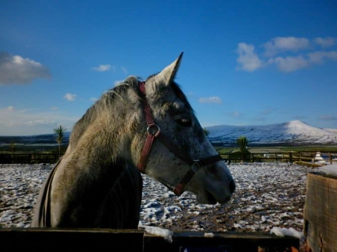 Winter at Dingle Horse Riding